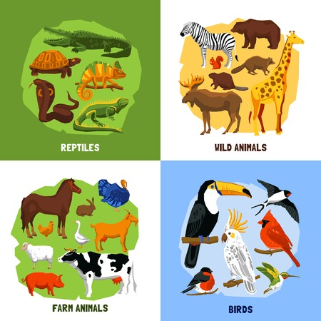 Cartoon 2x2 zoo images of animals sets grouped by reptiles birds wild and farm animals vector illustration