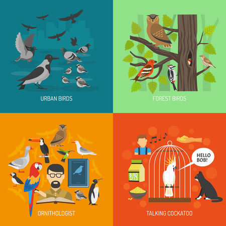 catbird: Bird 2x2 images concept presenting urban and forest bird ornithologist and talking cockatoo flat vector illustration
