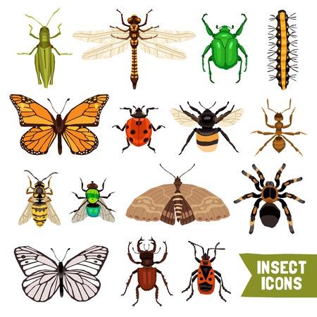 insecto: Insectos de conjunto de iconos. Ilustración vectorial insectos plana. Insectos aislado Conjunto decorativo. Insectos del diseño determinado. Colección de los elementos insectos. Vectores