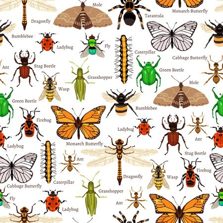 昆虫のシームレスなパターン。昆虫フラットのベクター イラストです。昆虫の装飾的なデザイン。 昆虫の要素のコレクションです。
