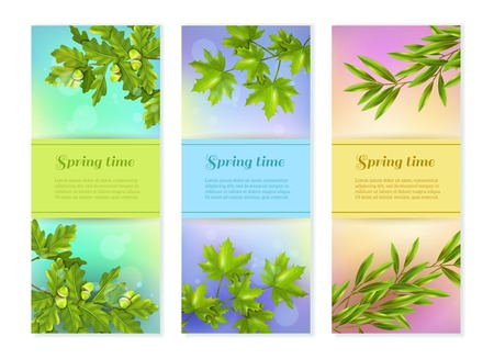 vertical image: Bright colorful spring collection of vertical banners with olive oak and maple branches at sun glare background flat vector illustration Illustration