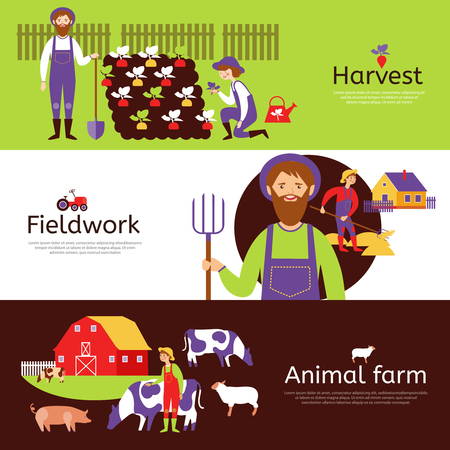 fieldwork: Fieldwork harvesting and livestock animals farm 3 flat horizontal banners in countryside colors abstract isolated vector illustration