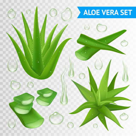 cuttings: Aloe vera medicinal plant leaves cuttings and juice drops elements collection on transparent background realistic vector illustration
