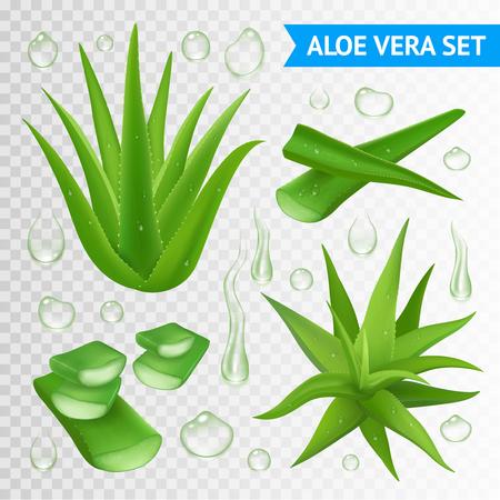 Aloe vera medicinale plant bladeren stekken en sap druppels elementen collectie op transparante achtergrond realistische vector illustratie