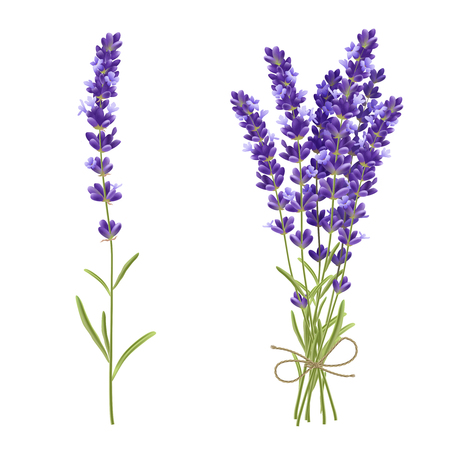 Fresh cut fragrant lavender plant flowers bunch and single 2 realistic icons set isolated vector illustration