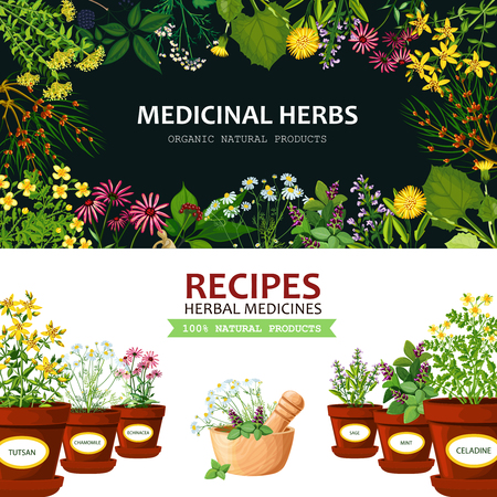 calendula: Color horizontal banners with title depicting medicinal herbs in clay mortar and recipes vector illustration Illustration