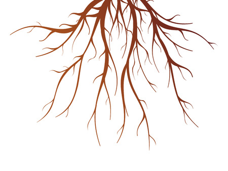 root: Brown tree root on white background flat isolated vector illustration