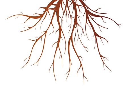 la raíz del árbol de Brown en el fondo blanco ilustración vectorial aislado plana