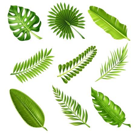 흰색 배경에 고립 된 벡터 일러스트 레이 션에 열 대 야자수 가지의 다른 모양을 보여주는 사실적인 스타일의 녹색 장식 요소의 컬렉션 일러스트