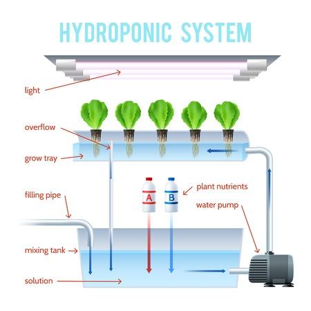 Hydroponics Farbige Infografik Verfahren von Pflanzen auf künstlichen Umgebungen ohne Boden wachsen und erklären, wie Vektor-Illustration