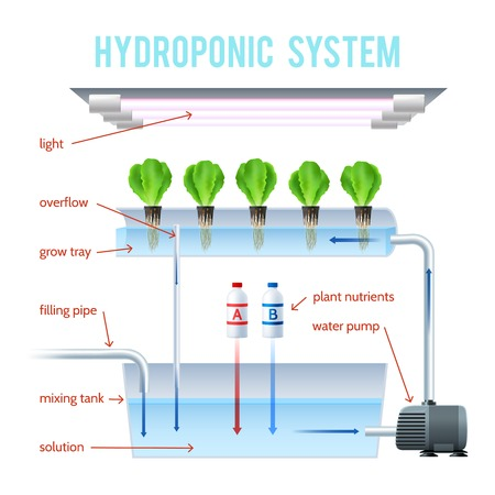 Hydroponics Colored Infographic method of growing plants on artificial environments without soil and explain how vector illustration Vectores