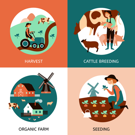 breeding: Organic farm 4 flat icons square banner with cattle breeding sowing and harvesting abstract isolated vector illustration