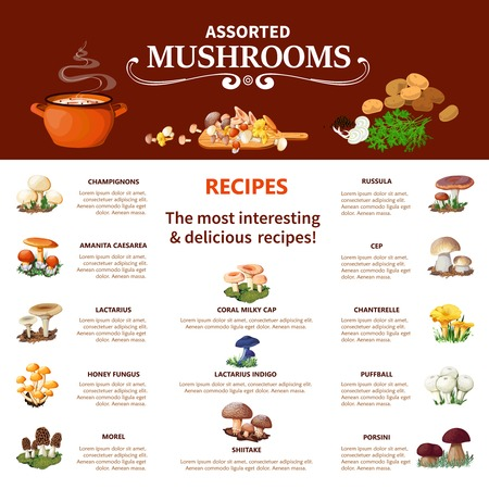 edible: Assorted  mushrooms infographics flat layout with visual information about different edible species and most interesting and delicious recipes vector illustration