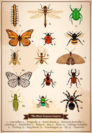 firebug: Vintage book page poster with set of different most famous insects drawn in doodle style vector illustration