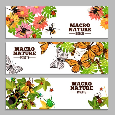 wasps: Insects horizontal banners of wasps butterflies bugs beetles and others on flowers and leaves doodle vector illustration
