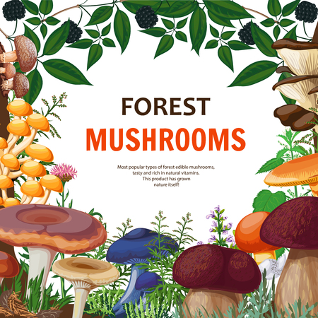 morel: Forest background with decorative frame containing wild mushrooms field flowers and twig of bush with blackberries cartoon vector illustration