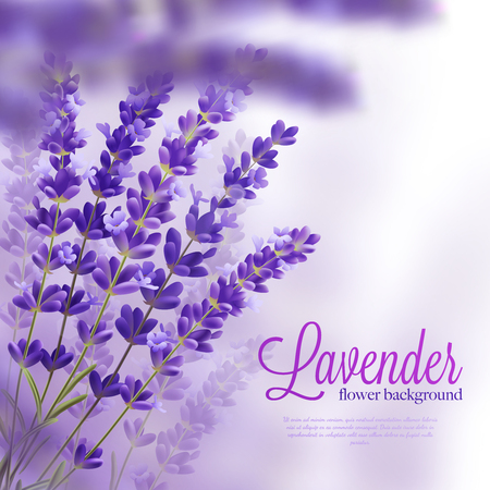 Beautiful background with few branchs of lavender flowers violet tons shades and title vector illustration