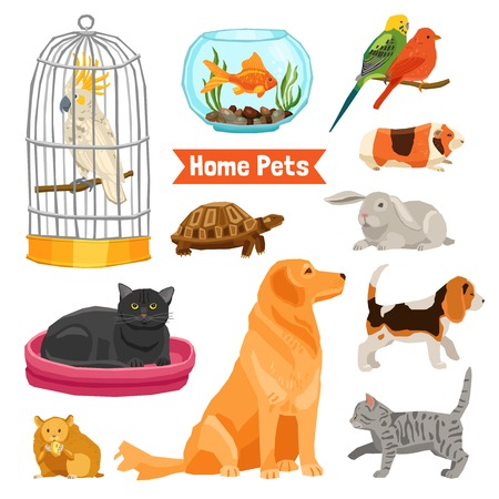 Big and small home pets set with dogs cats birds fish turtle hamster rabbit and guinea pig on white background flat isolated vector illustration Çizim