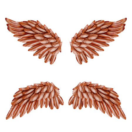 artificial wing: Two pairs of small brown bird wings set isolated on white background realistic vector illustration