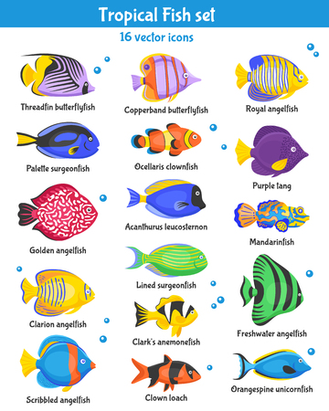 icônes de poissons tropicaux exotiques fixés avec des espèces de poisson plat isolé illustration vectorielle