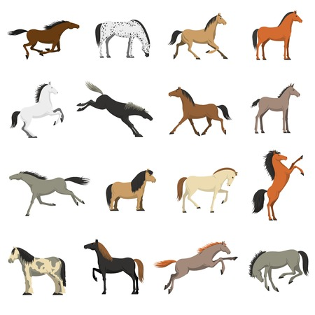 shetland pony: Best horses breeds icons collection for work sport and entertainment with shetland pony abstract isolated vector illustration