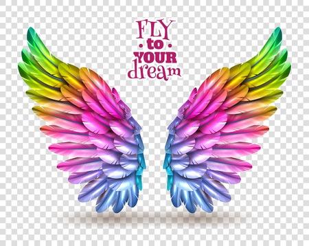 barvitý: Pár barevných ptačích křídel sada na průhledné pozadí se stínem plochým vektorové ilustrace