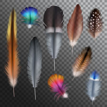 bird feathers: Realistic set with small and big multicolored bird feathers isolated on transparent background vector illustration