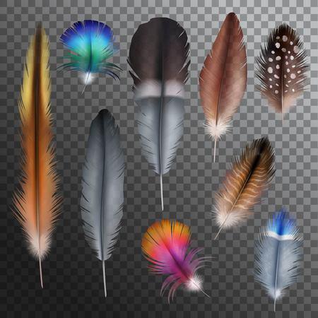 Realistisch set met kleine en grote veelkleurige vogelveren die op transparante achtergrond vector illustratie Vector Illustratie