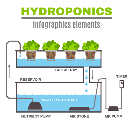 Color flat cncept depicting scheme and the principle of hydroponics vector illustration Zdjęcie Seryjne - 60619688