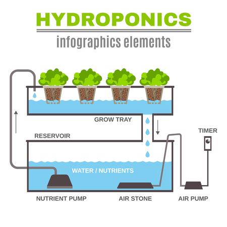 Color flat cncept depicting scheme and the principle of hydroponics vector illustration Illustration