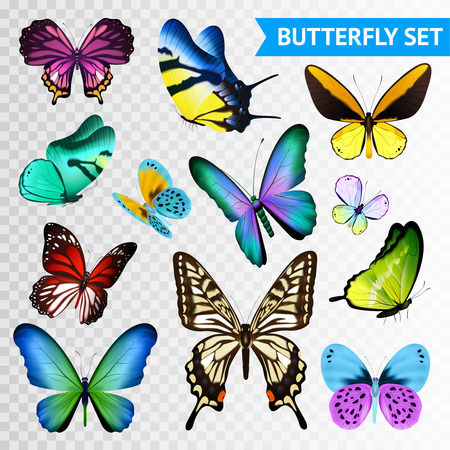 Small and big multicolored butterflies set isolated on transparent background flat vector illustration