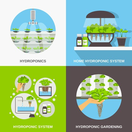 hydroponic: Color flat composition 2x2 depicting hydroponic system gardering vector illustration