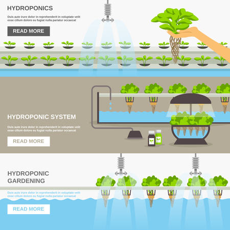 Color flat horizontal banners about hydroponic system gardering with text field vector illustration Vettoriali