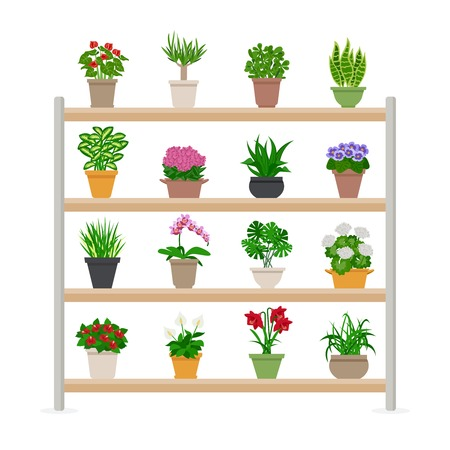 different types: Houseplants and bright flowers in blossom on shelves composition flat vector illustration