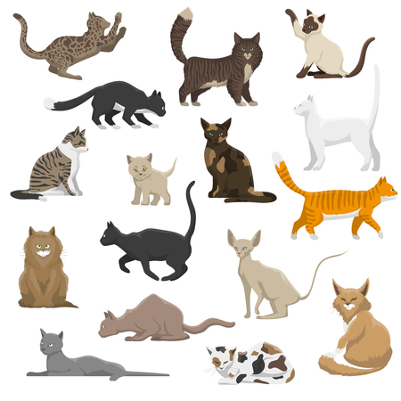 domestic cat: Domestic popular and rare exotic cat breeds flat icons collection with persian and maine coon isolated vector illustration Illustration