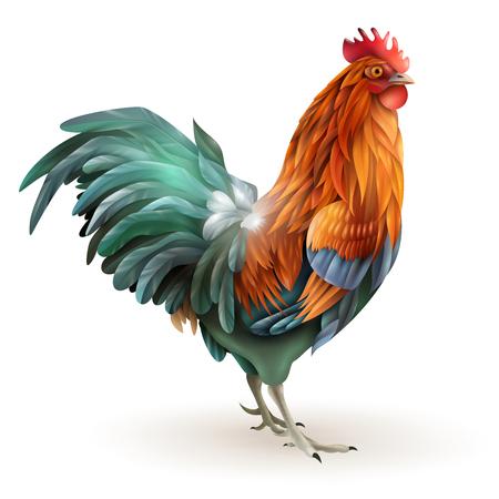 granja avicola: Clásico gallo cuentos de hadas con rojo plumaje verde año que viene signo del zodiaco vista lateral ilustración vectorial abstracto
