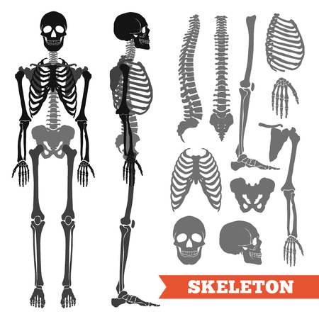 Human anatomy flat monochrome set with skeletons and single bones isolated on white background vector illustration Illustration