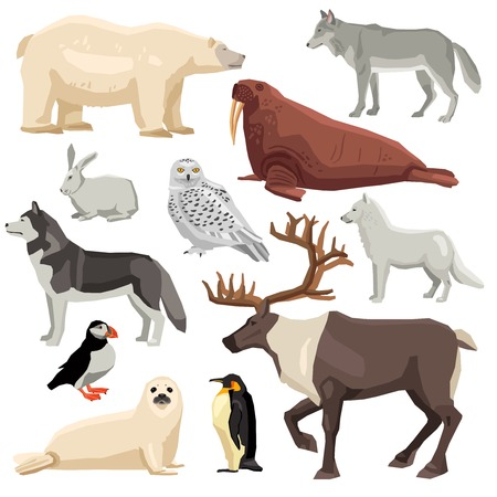 fur seal: DIfferent flat polar animals and birds set isolated on white background vector illustration Illustration