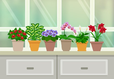 types of cactus: Houseplants and flowers in blossom background with window and drawers flat vector illustration