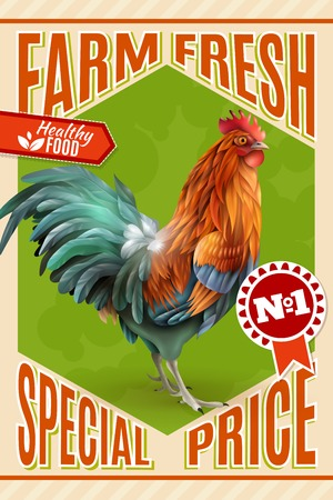 breeding: Healthy organic poultry meat sale and roosters for breeding  farm market price offer classic vintage poster vector illustration Illustration