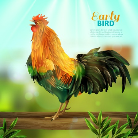 Colorful vector illustration of yellow rooster with green tail feathers at village elements background flat vector illustration Illustration