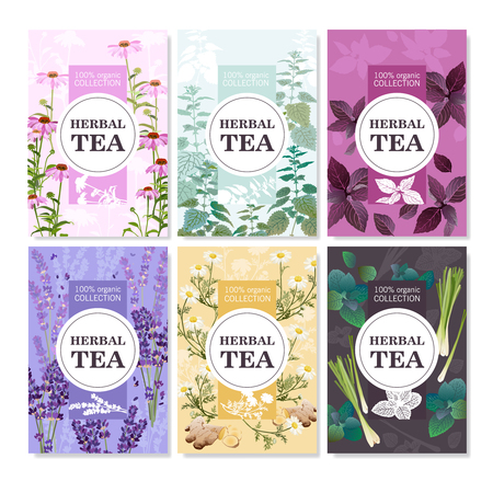 camomile tea: Collection of spices and meadow flowers for organic tea colored cards with title vector illustration