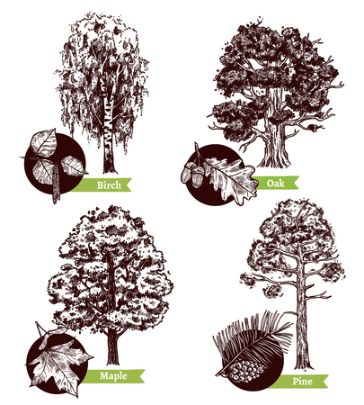 pine boughs: Four various sketch deciduous trees and leaves design concept isolated on white background hand drawn vector illustration Illustration
