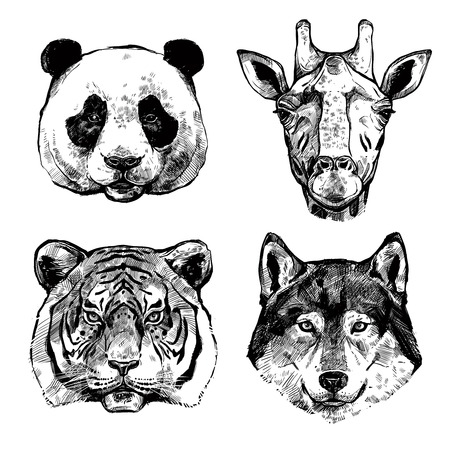 wolf face: Black and white hand drawn animals portraits of panda giraffe tiger and wolf isolated vector illustration Illustration