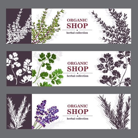 thyme: Herbal cards with herbal spices and fragrant lavender on sepia horizontal background vector illustration