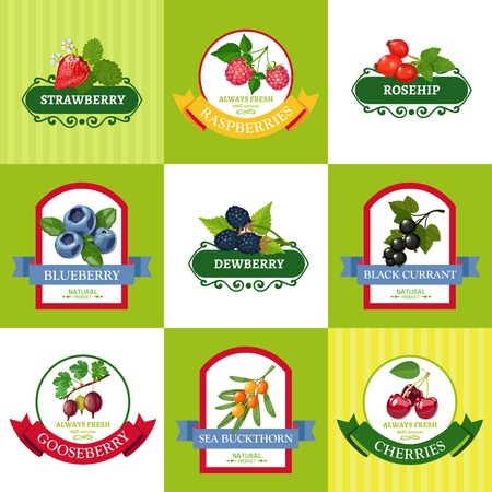dewberry: Wild and organically grown berries fresh berries labels flat icons collection for healthy diet isolated vector illustration