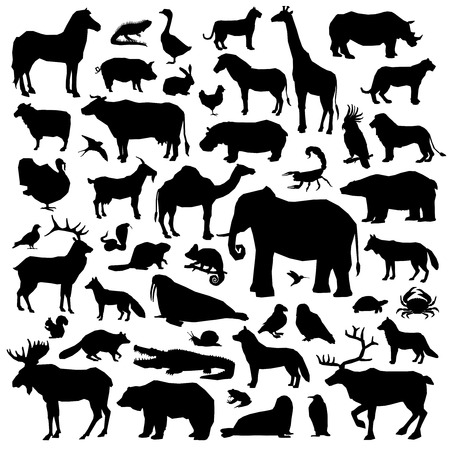 animal silhouette: Wild and domestic animals and birds living in various climatic zones big black silhouette set isolated on white background vector illustration