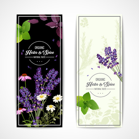 camomile tea: Card with organic herbs and blooming flowers and spices on black and white background vector illustration
