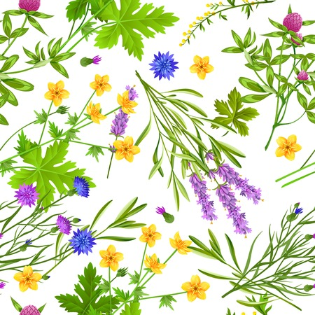 buttercup  decorative: Flat seamless pattern with blooming herbs and wild flowers such as buttercup cornflower lavender and clover on white background vector illustration
