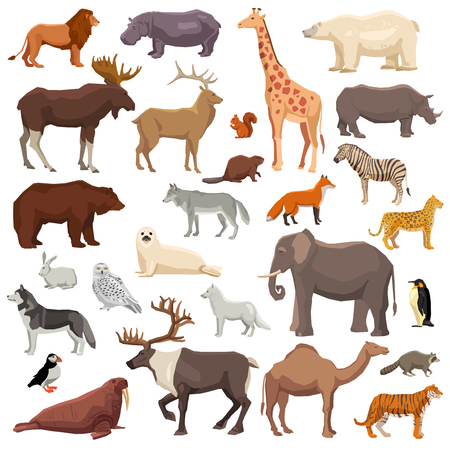climatic: Big flat set of wild animals and birds living in various climatic zones isolated on white background vector illustration